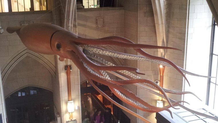 what is the difference between a colossal squid vs a