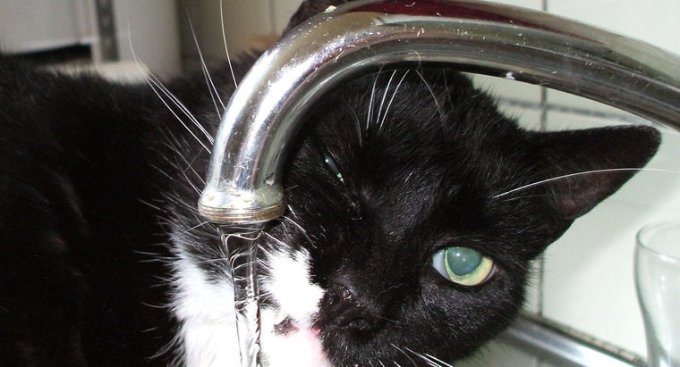 What Is the Difference Between Distilled Water and Tap Water?