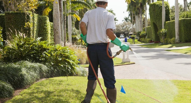 What Is the Difference Between Insecticides and Pesticides?