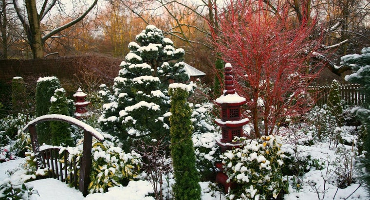 What Is the Difference Between Japanese Maples and Evergreens?