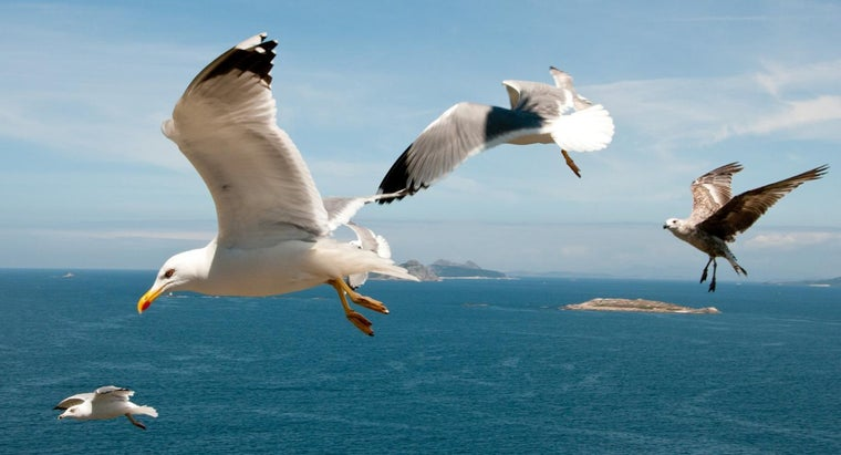What Is Difference Between Male and Female Seagulls?