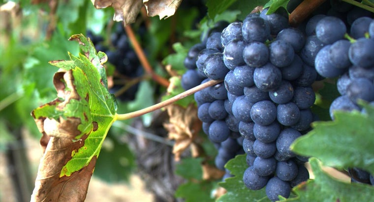 What Is the Difference Between Merlot and Cabernet Sauvignon?