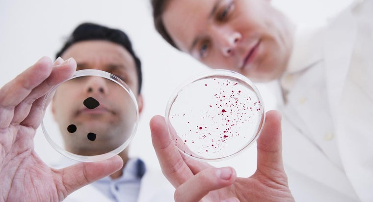 What Is the Difference Between a Protozoa and a Bacteria?