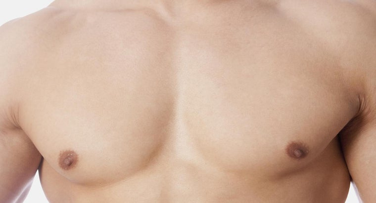 What Is the Difference Between the Upper Torso and Chest?