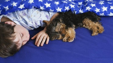 How Long Will A Female Yorkie Bleed While In Heat Referencecom