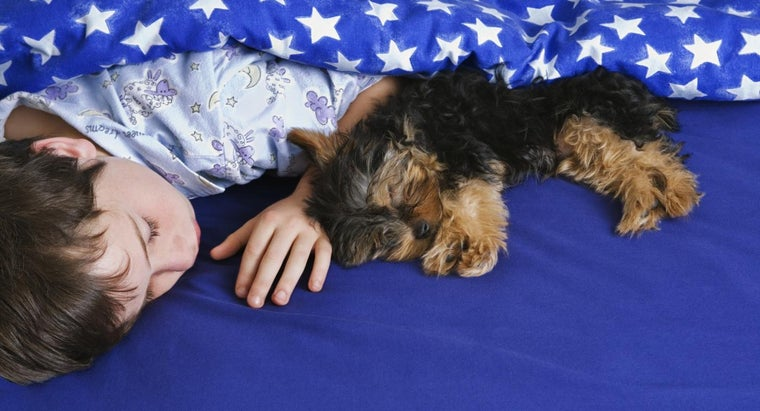 What Are the Differences Between Male and Female Yorkie Puppies?