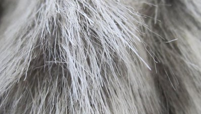 What Are the Differences Between Natural and Synthetic Fibers?
