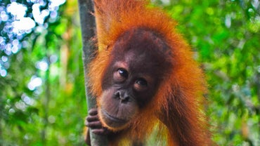 What Are the Different Types of Apes?