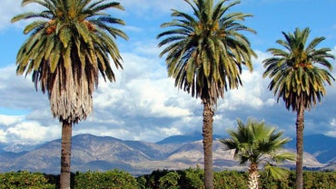 What Are Some Different Types of Palm Trees?