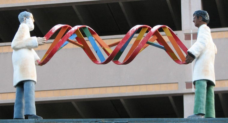 How Does DNA Determine the Traits of an Organism?