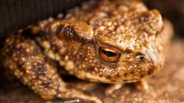 Do Toads Live in the Water?