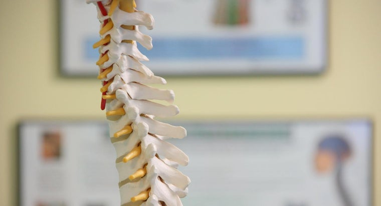 How Do Doctors Diagnose the Cause of Back Pain?