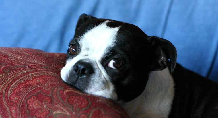 Why Do Dogs Groan?