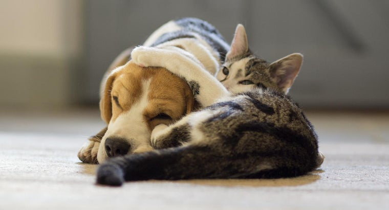 Do Dogs Make Better Pets Than Cats?