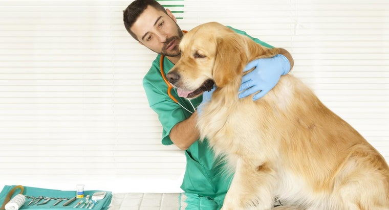 How Often Do Dogs Need Rabies Shots in New York?
