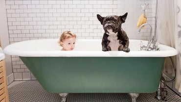 Why Do Dogs Smell Even After Having a Bath?