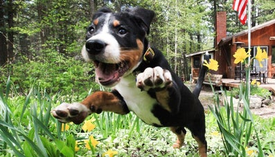 Why Do Dogs Sneeze When They Are Excited?