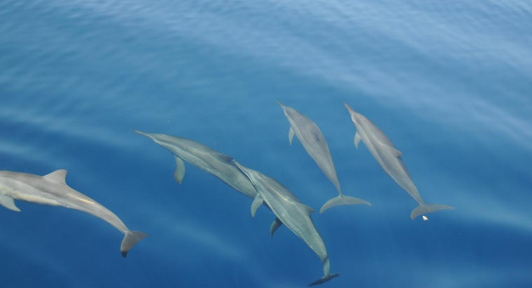What Is a Dolphin's Habitat?