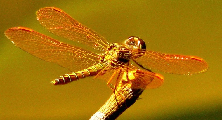 What Is a Dragonfly's Habitat?