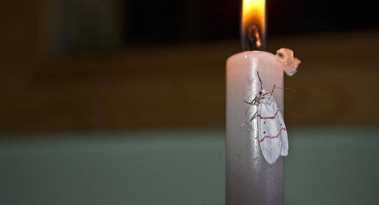 What Draws a Moth to Flame?