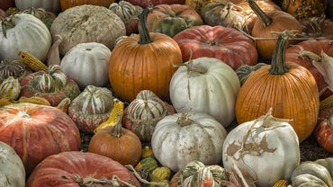 How Do I Dry Out Pumpkin Shells?