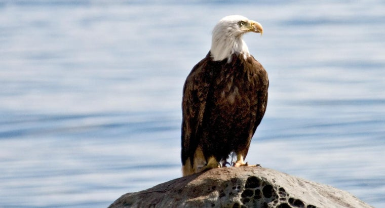 Are All Eagles Protected?