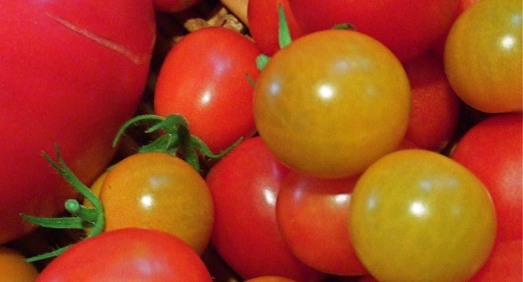 What Are Some Easy Recipes for Tomatoes From a Garden?