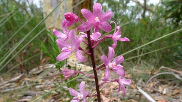What Eats Orchids in the Rain Forest?