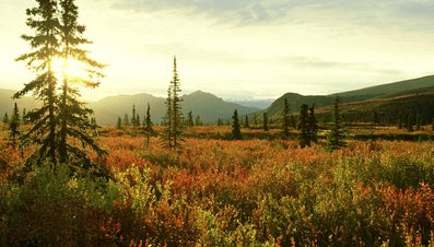What Are the Ecological and Environmental Concerns of the Tundra Biome?