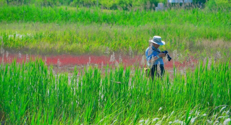 What Does an Ecologist Study?