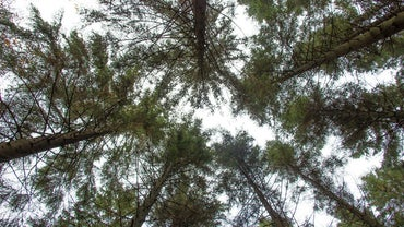 What Is the Economic Importance of Gymnosperms?