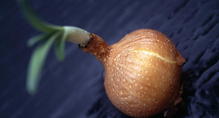 What Is the Edible Part of an Onion Plant?