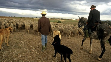 What Are the Effects of Rural to Urban Migration?