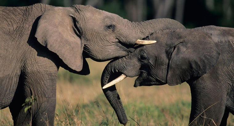 What Do Elephants Symbolize Reference