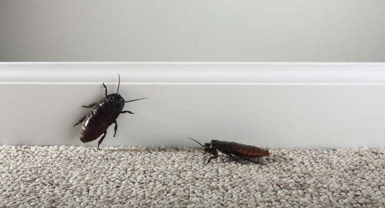 How Do You Eliminate Roaches?