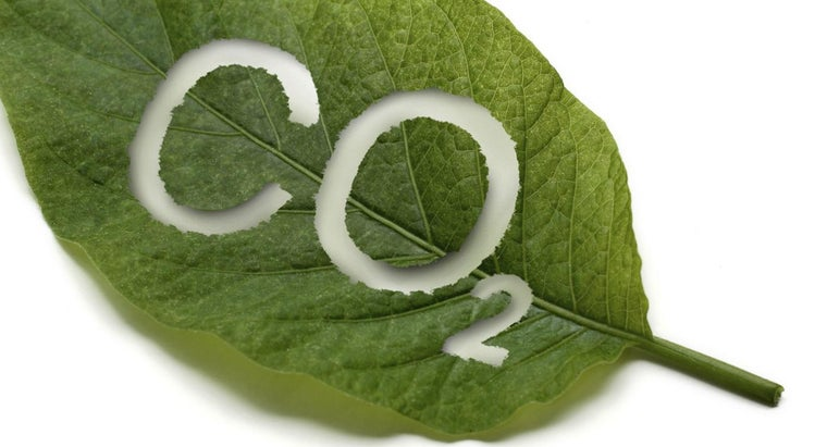 What Is the End Product of Photosynthesis?