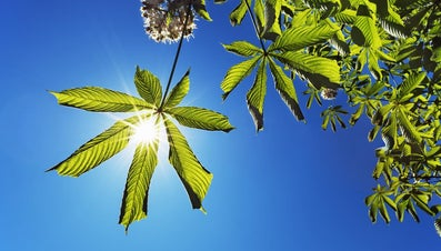 Where Does the Energy for Photosynthesis Originate?