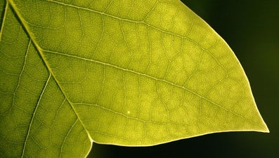 What Is the Equation of Photosynthesis?