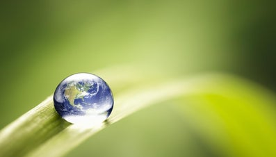How Can People Protect the Environment?