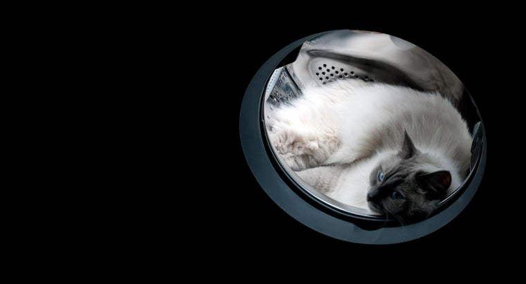 Have We Ever Sent a Cat to Space?