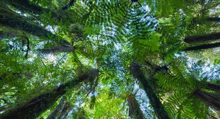 What Is an Example of Mutualism in the Rainforest?