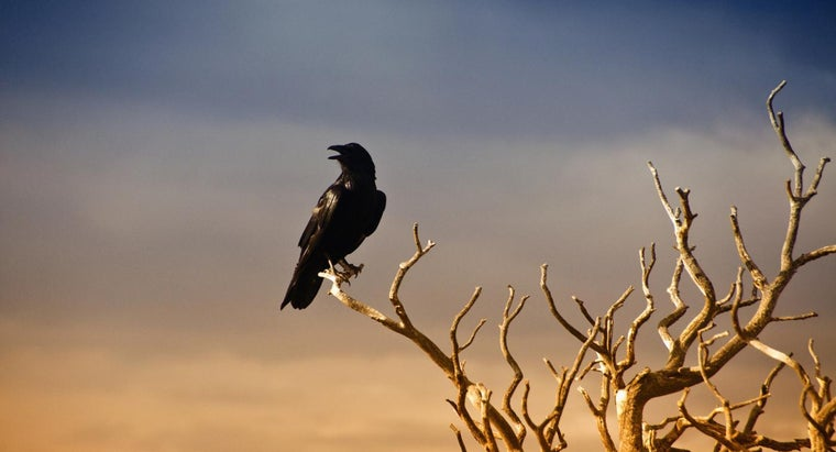What Are Examples of Assonance in The Raven?