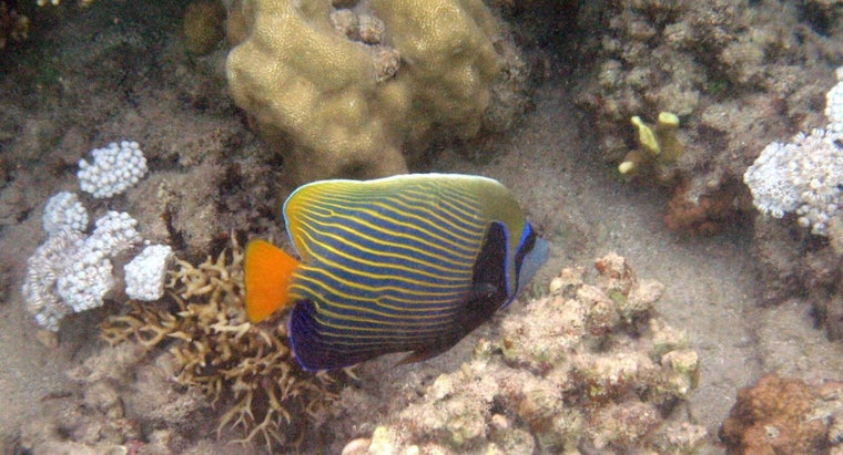 What Are Examples of Bony Fish?