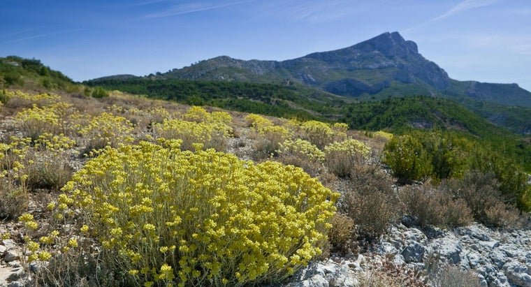 What Are Examples of Shrubs?