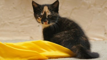 What Are Examples of Unique Female Kitten Names?