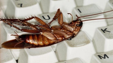 How Do You Exterminate Roaches?