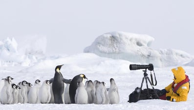 Who Are Some Famous Wildlife Photographers?