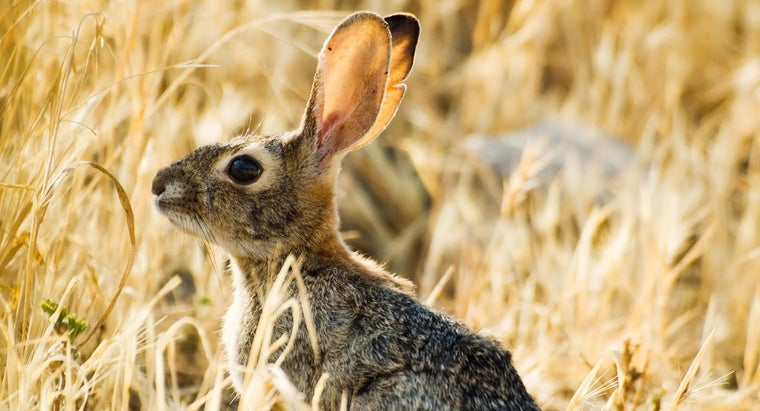How Far Can a Rabbit's Ear Hear?