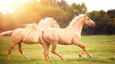 What Is the Fear of Horses Called - Felophobia, Hippophobia or Equiphobia?