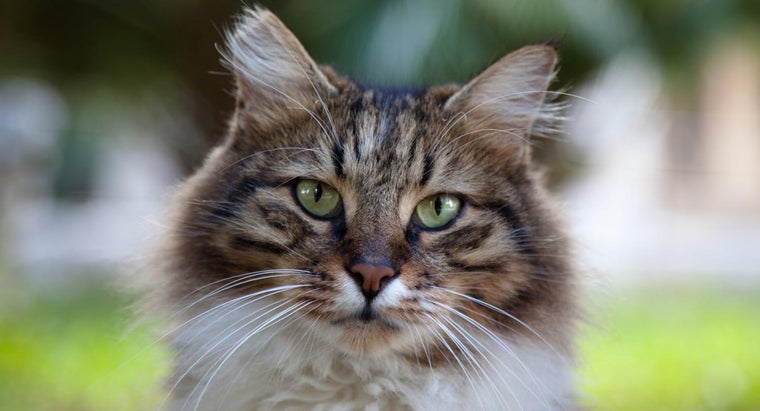 What Is the Feline Thyroid For?